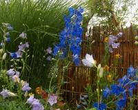 juni-10-rittersporn-glockenblume-lwenmulchen-goldlack