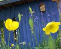 juni-2010-mohn-einjhrig-mit-sibirische-iris