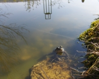 april-frosch-09