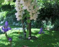 e-akazie-und-iris-06-2009