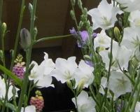 juni-2010-glockenblume-mit-fingerhut