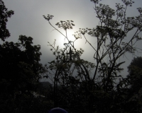 sonnenaufgang-im-zierfenchel