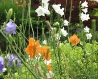 web-oranger-mohn-20-06-13_8950
