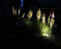 web-palmlilien-16-07-13_9447