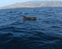 auch-ein-paarpilotwale-haben-wir-gesehen