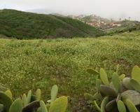 gruenes-la-gomera-bei-el-cercado-08-03-13_6353