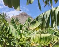 in-der-bananenplantage-blick-auf-den-hausberg-stuhl