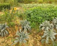 der-bio-nutzgarten