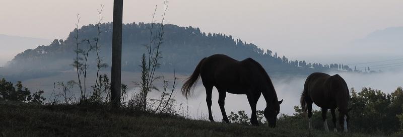 Die Pferde von Terenzana
